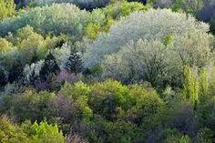 ผลการค้นหารูปภาพสำหรับ french forest