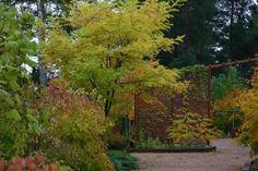 arboretum magnolia lohja - Google Search