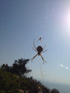 Spider and spider child?