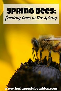 Spring has sprung! Now what do you do with the bees you wintered? That's a really good question and I hope to help you out with the answers.
