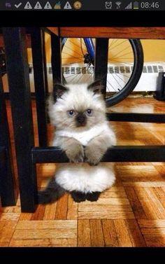 What a cutie pie ......