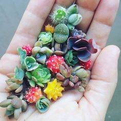 Happy Monday Loved this snap via @fairyblooms #succulents #cactus #propagation…