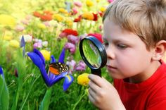 Explore pollinators and the plants they pollinate for important lessons in the interdependency of living things.