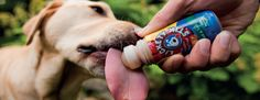 Lickety Stik   Natural Dog Treats   Pet Training Treats   PetSafe - Lickety Stik Natural Dog Treats, Training, Pets, Nature, Products, Naturaleza, Work Outs, Excercise, Onderwijs