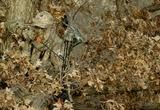bowhunting - Google Search