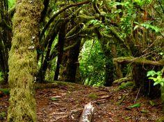 Hobbit Trail - Florence, Oregon