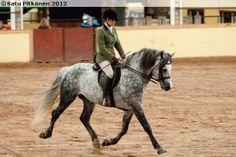 Connemara stallion Black Shadow