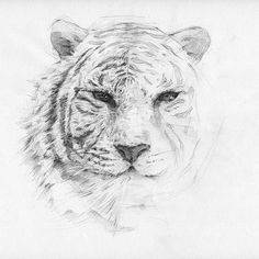 Tiger Print Art Wall Art Printable Animal Print by sketchmodern