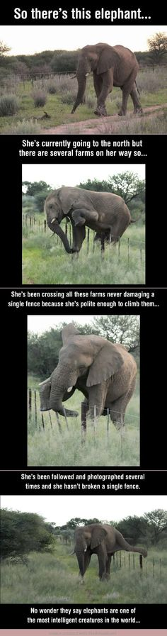 An elephant with excellent manners