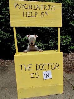 The Dogtor Is In...