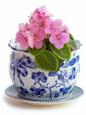 Grow Perfect African Violets ~ Violet Pot Tips