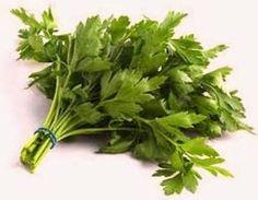 El perejil es una de las hierbas más conocidas y utilizadas en el arte culinario, la cual ha sido cultivada por más de 2.000 años. El per...