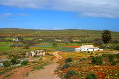 Namaqualand, South Africa travel-and-places Places To Travel, Places To See, Travel Destinations, Flora, Beautiful Places In The World, Months In A Year, Africa Travel, Live, South Africa