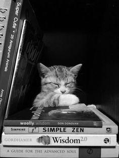 ZEN CAT♡*¨)¸.·´¸.·*´¨) ¸.·*´¨)(¸.·´ (¸*´♡