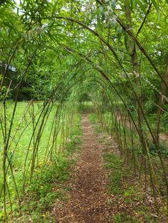 A trip up the garden path