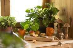 Decoration, Gardens, Fall Home Decor, Food, Decor, Decorations, Decorating, Dekoration, Ornament