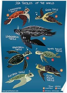 Sea Turtles of the World Posters