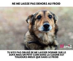 Quand il fait froid humain tu as froid?et bien moi aussi c'est pareil! When it's cold, you Fun Facts About Animals, Animal Facts, Animal Quotes, Animals And Pets, Cute Animals, Wild Animals Photography, Extinct Animals, Animal Protection, Travel Humor