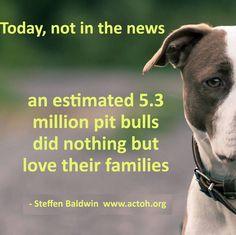 Today, not in the news... #MyVeganJournal #DogLover #PitBull