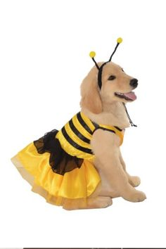 Rubies Costume Halloween Classics Collection Pet Costume, Large, Bumblebee Dress Rubie's  #halloween #costumes #halloweencostumes #petcostumes #dogcostumes #dogs #pets #animals #perros #animales #trajes #animalesdecompañía #ropaparaperros