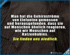 Wir sind alle süß! #Elefanten #Fufact #Fakt #Fakten #Wissen #lustig #Sprüche