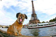 #viagem #cachorro #oscar Paris
