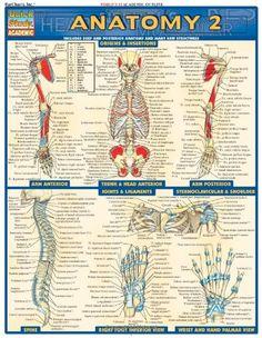 Anatomy 2 (Quick Study Academic) by Inc. BarCharts http://www.amazon.com/dp/1572228563/ref=cm_sw_r_pi_dp_.-EStb1E3RQ4DBZ0 $6.25