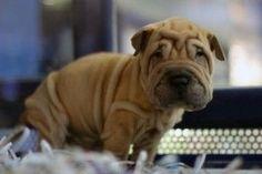 Enfermedades de piel en perros: cinco problemas habituales y sus soluciones | EROSKI CONSUMER