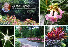 July 19, What's in Bloom, The Dallas Arboretum, Arboretum, Garden, Flowers
