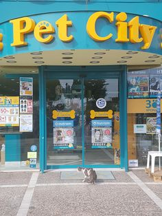A stray cat waiting outside a pet shop for food in Greece (He waits there everyday) Pet Shop, Pet Mart, Aquarium Shop, Clothing Store Interior, Pet Station, Pet Hotel, Dog Grooming Business, Clinic Design, Crate Training