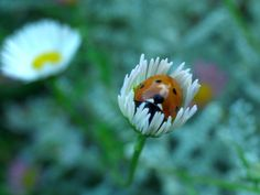 For whoever took this pic, GOOD EYE! Such a wonderful find for a photo! I love Ladybugs! ~JSP