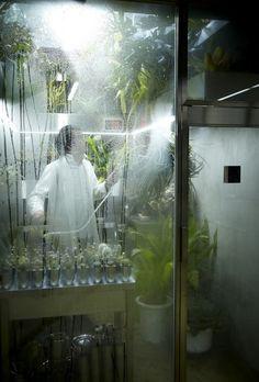 AMBR(Azuma Makoto Botany Room)