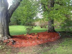 Garden between maples