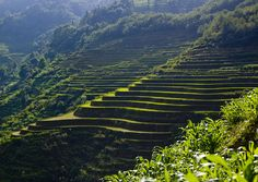 Terraced rice fields, Yunnan, China