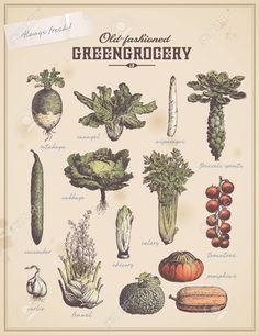 greengrocery - set of vintage vegetable illustrations