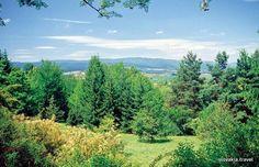 Slovakia, Pine Hill Arboretum
