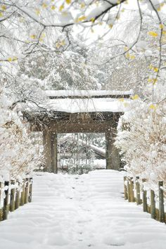 Meigetsuin Kanagawa Japan in winter by Candy train
