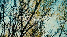Spring trees - Стоковое видео   by dimansky
