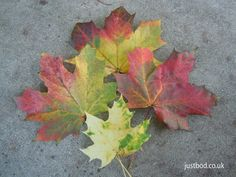 """""""How beautifully leaves grow old. How full of light and colour are their last days.""""  ~ John Burroughs ~     Justbod (@justbodteam) on Twitter Viking Art, Celtic Art, Unique Gifts, Leaves, Seasons, Colour, History, Twitter, Color"""