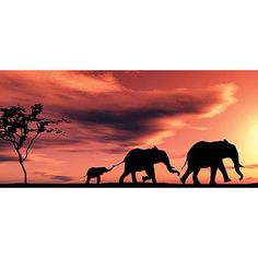 African Sunset Photo Backdrop