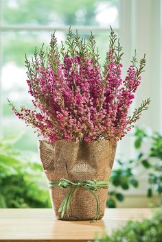 Care of the Heather Plant - The Heather Plant (Erica quadrangularis) is native to South Africa. Its pink blossoms will cover the branches for several weeks as long as you provide the right care. Beautiful Flower Arrangements, Beautiful Flowers, Scottish Flowers, Heather Plant, Heather Flower, Floral Wedding, Wedding Flowers, Scottish Heather, Plant Table