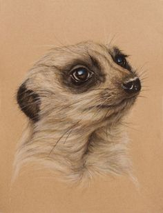 Meerkat by Wendy Beresford on Strathmore Toned Tan. Original drawing done for Strathmore product packaging. Realistic Animal Drawings, Cute Drawings, Animal Sketches, Art Sketches, Art Pastel, Decoration Gris, Toned Paper, Paper Drawing, Illustration