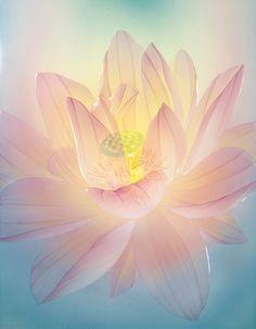 lotus F6 Lotus Art, Create A Critter, Buddha Art, Guanyin, Zen Art, Pastel Art, Water Lilies, Pretty Art, Flower Photos