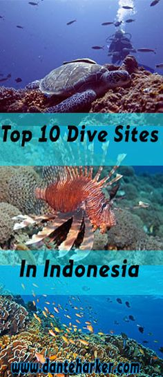 Top 10 Dive Sites in Indonesia from Dante Harker