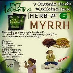 HERB #6