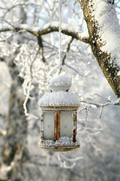 Winter Snow, Winter Time, Winter Season, Winter Christmas, Beautiful Winter Pictures, Winter's Tale, Holly Berries, Lanterns Decor, Winter Beauty