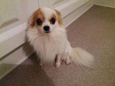 Nu også i Kokkedal->Hjælp Min lille Hund er Stjålet