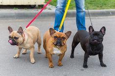 consejos para que tu perro no jale la correa