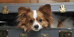 Всё, что нужно знать о перевозке животных в транспорте