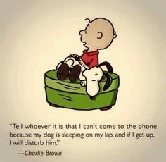 Can't disturb him! Charlie Brown and his best friend Snoopy. I Love Dogs, Puppy Love, Husky Corgi, Tierischer Humor, Funny Humor, Drunk Humor, Ecards Humor, Nurse Humor, Charlie Brown Und Snoopy